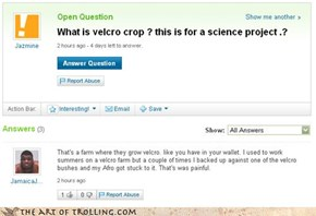 Velcro Farm Grows Velcro Crops