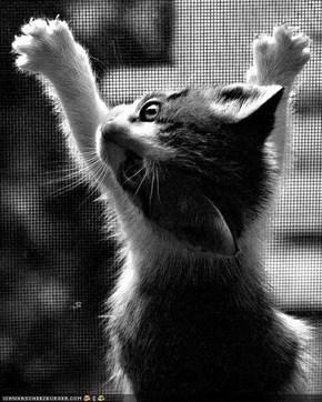 Cyoot Kitteh of teh Day: Umm...Iz Nawt Escapin.  Iz Juss...Playin.  Yah...Playin...