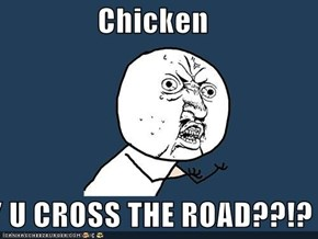Chicken  Y U CROSS THE ROAD??!?