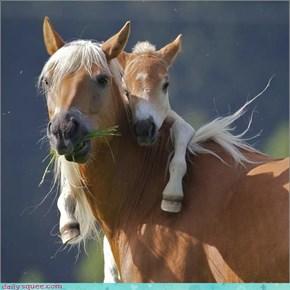 Acting Like Animals: I Love You Mama!
