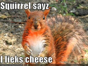 Squirrel sayz  I lieks cheese