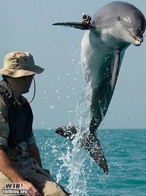 Robo Dolphin WIN