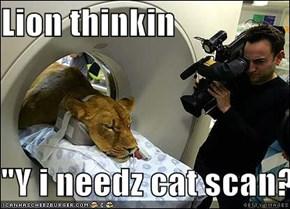 """Lion thinkin  """"Y i needz cat scan?"""""""