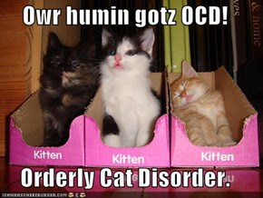 Owr humin gotz OCD!  Orderly Cat Disorder.