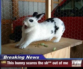 Breaking News - This bunny scares the sh** out of me