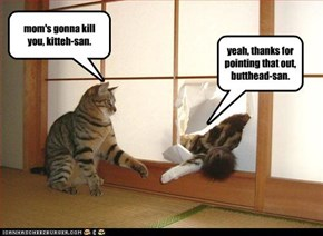 mom's gonna kill you, kitteh-san.
