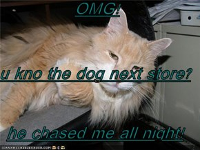 OMG! u kno the dog next store? he chased me all night!