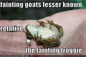 fainting goats lesser known relative, the fainting froggie