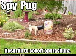 Spy Pug