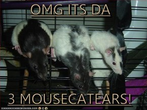 OMG ITS DA  3 MOUSECATEARS!