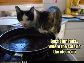 Bachelor Pads... Where the cats do the clean-up