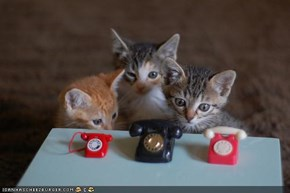 Cyoot Kittehs of teh Day: Nawt Gunna Reech Owr T-T-T-Telefones