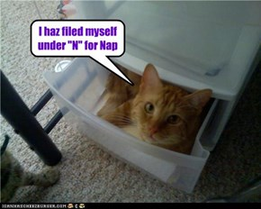 "I haz filed myself under ""N"" for Nap"