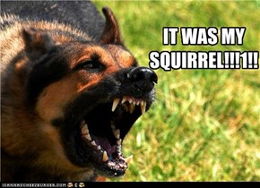 IT WAS MY SQUIRREL!!!1!!