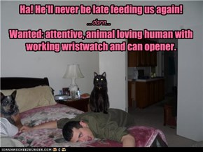 Ha! He'll never be late feeding us again!                    Wanted: attentive, animal loving human with working wristwatch and can opener.