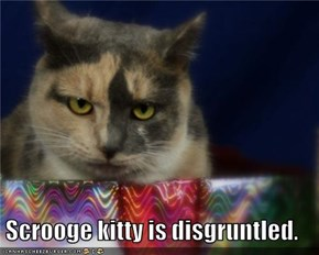 Scrooge kitty is disgruntled.