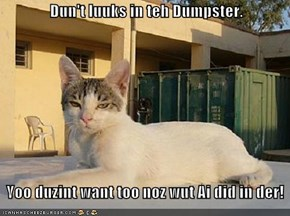 Dun't luuks in teh Dumpster.      Yoo duzint want too noz wut Ai did in der!