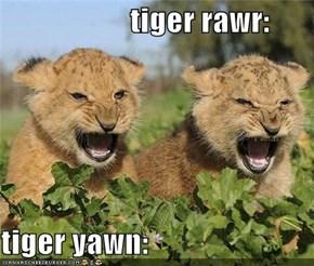 tiger rawr:  tiger yawn: