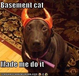 Basement cat  Made me do it