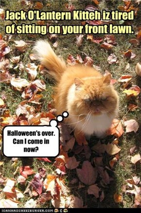 Jack O'Lantern Kitteh iz tired of sitting on your front lawn.