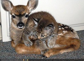 Cyoot Kitteh n Deer of teh Day: Ur Very Deer 2 Mah Hart