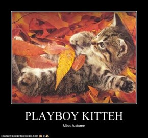PLAYBOY KITTEH