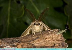Gypsy Moth Wants To Read Your Fortune.
