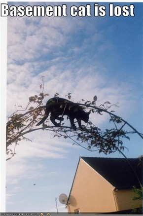 Basement cat is lost