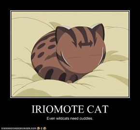IRIOMOTE CAT