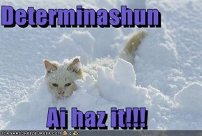 Determinashun  Ai haz it!!!