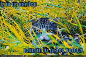 Iz in ur garden  paintin ur grass yellow