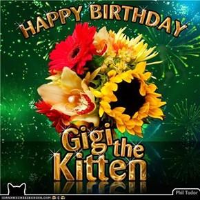 Happy Birthday GigitheKitten . . . . .