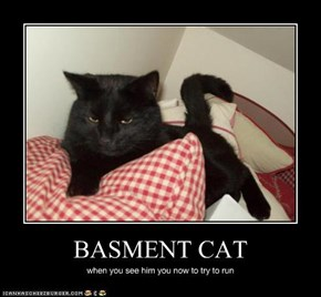 BASMENT CAT