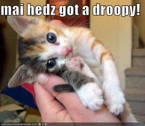 mai hedz got a droopy!