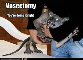 Vasectomy