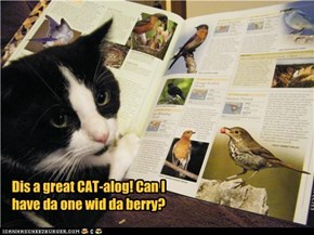 Dis a great CAT-alog! Can I have da one wid da berry?