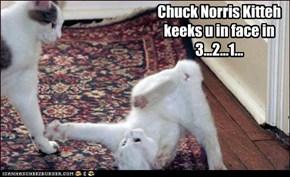 Chuck Norris Kitteh keeks u in face in 3...2...1...