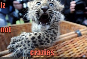 iz not crazies