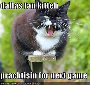 dallas fan kitteh   pracktisin for next game