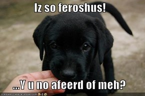 Iz so feroshus!  ...Y u no afeerd of meh?