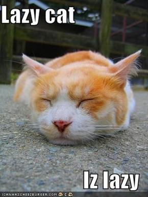 Lazy cat  Iz lazy