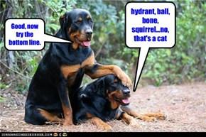 hydrant, ball, bone, squirrel...no, that's a cat
