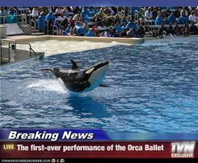 Breaking News - The first-ever performance of the Orca Ballet