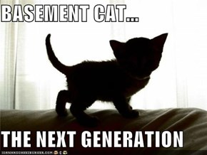BASEMENT CAT...  THE NEXT GENERATION