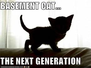 BASEMENT CAT...  THE NEXT GENERATION