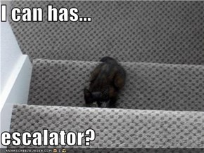 I can has...  escalator?