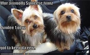 Wur axwoolly Symeese twinz Ownlee 1 of uz  got ta keep da eerz.