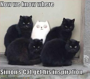 Now we know where  Simon's Cat get his inspiration.