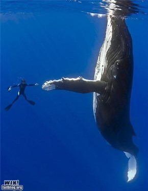 Epic High Five WIN