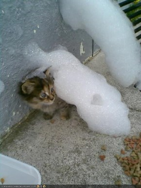 Cyoot Kitteh of teh Day: Fluffy Whiskerson, Queen of Bubbles